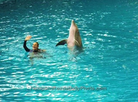 Dolphin Waving to the Audience after Baltimore Aquarium Show