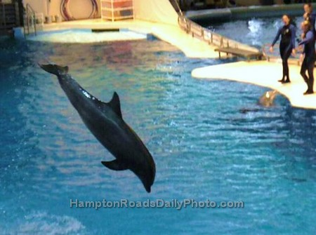 Dolphin Leaping at Baltimore Aquarium Dolphin Show